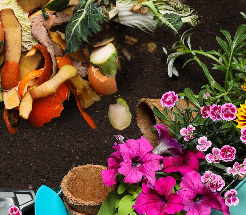 Compost et fleurs
